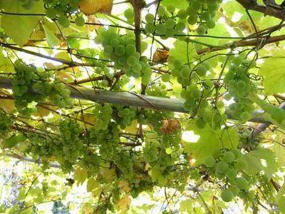 cretamums-kalytera-kalokairia (3)